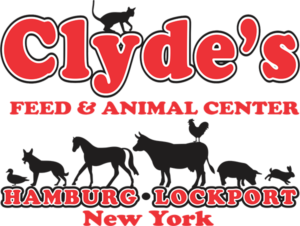 Clydes Feed Client - Social Media Management
